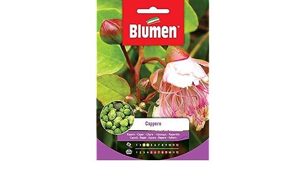SEMENTI DI CAPPERO orto giardino semi seeds blumen