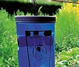 Trampa moscas con cebo - matamoscas fácil de usar y eficaz - trampas seguras