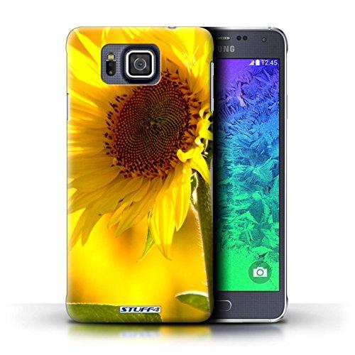 Kobalt® Imprimé Etui / Coque pour Samsung Galaxy Alpha / Begonia conception / Série floral Fleurs Fleur jaune