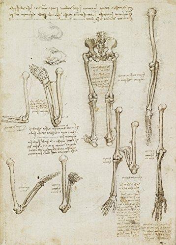 Vintage Anatomie LEONARDO da VINCI Arm und Beine Knochen Struktur, Italien, 14-15 Jahrhundert. 250 g/m², glänzend, Kunstdruck, A3, Reproduktion