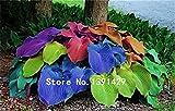 100pcs / pack Hosta Samen Perennials Plantain-Lilien-Blumen-weiße Spitze Hausgarten Bodendecker 7