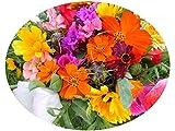 3-4 m² Blumenmischung Romantik-Garten Blumensamen Blumenblickfang Balkonkästen
