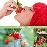 Pinkdose 600pcs / bag Roter Riese Climbing Erdbeeresamen Fruchtsamen für DIY seltene Samen für...