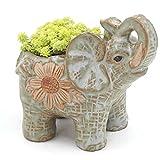 Keramik Topf Elefanten Kaktus Sukkulenten Pflanze Topf Blumen Pflanzer Mini Garten