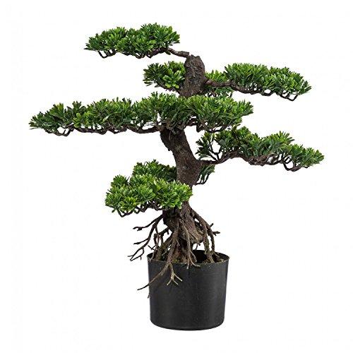 Kunstpflanze Pflanzenart: Bonsai
