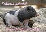 Schwein gehabt! (Wandkalender 2019 DIN A4 quer): Tierische Glücksbringer (Monatskalender, 14 Seiten ) (CALVENDO Tiere)