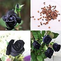 BigFamily 100 Unids Misteriosa Rosa Negro Semillas de Plantas Amante DIY Hermosas Plantas de Jardín