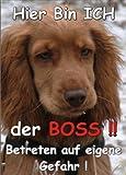 INDIGOS UG - Türschild FunSchild - SE95 DIN A4 ACHTUNG Hund COCKER SPANIEL - für Käfig, Zwinger, Haustier, Tür, Tier, Aquarium - aus hochwertigem Alu-Dibond beschriftet sehr stabil