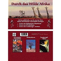 Mini-Gewächshaus - Durch das wilde Afrika - mit Samen vom Tulpenbaum, Affenbrotbaum und Strelitzie