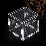 Acrilico Trasparente Di Animali Rettile Box Allevamento Serbatoi Container Per Lizard Chameleon Spider Snake Altri Rettili (11x11x11cm)