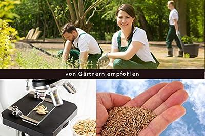 Regenerations-Rasen von EXPONA Profi Rasen - Die Marke aus dem Garten- und Landschaftsbau - Rasensaat zur Auffrischung für 40m² zur Einsaat und Nachsaat - RSM 3.2 - schnelle Keimung - dichter und saftiger Rasen von BSV Saaten bei Du und dein Garten