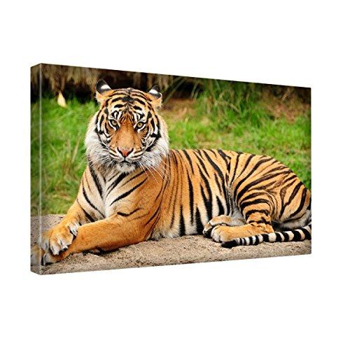 Animali Selvatici 144, Tiger Selvatici, Stampa Artistica