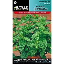 Semillas Batlle 097326BOLS - Menta Spicata