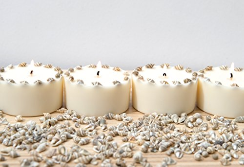 Duftkerze Soja Echte Muscheln Beige Kerze aus Bio Sojawachs ätherisches Öl Zitronen Verbena Geschenkbox lange Brenndauer Geschenk Idee - 3