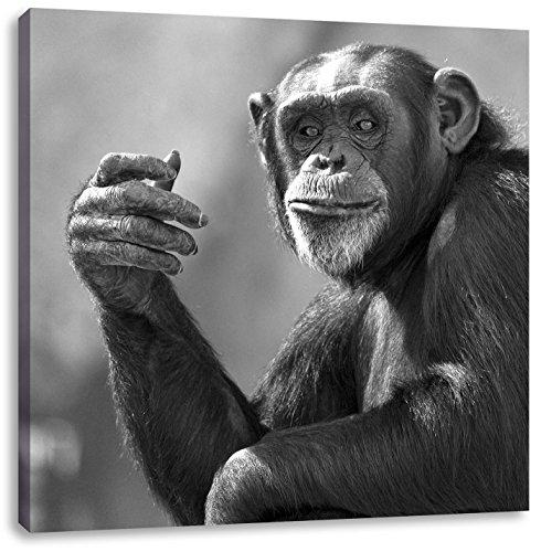 Aufmerksamer Schimpanse Kunst B&W, Format: 60x60 auf Leinwand, XXL riesige Bilder fertig gerahmt mit Keilrahmen, Kunstdruck auf Wandbild mit Rahmen, günstiger als Gemälde oder Ölbild, kein Poster oder Plakat