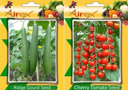 ShopMeeko SEED Ridge, Kirschtomate Seed (20 pro Paket) -