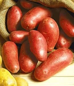 "Pflanz-Kartoffel ""Laura"",2.5 Kg Pflanzkartoffeln"