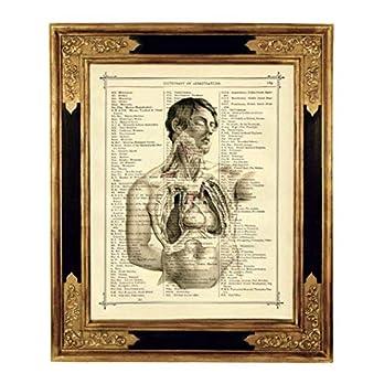 Anatomie Mann Torso Herz Medizin Poster Kunstdruck auf antiker Buchseite Geschenk Bild Steampunk ungerahmt