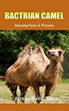 Bactrian camel: Amazing Facts & Pictures