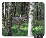 Gaming-Mauspads, Mauspad, Wolf Forest Animal Wild Nature Wildlife Säugetier