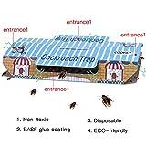 Cookey Kakerlake Fallen für Haus Schädlingsbekämpfung Töten Sie Affen Spinnen und Andere Bugs Insekten mit Köder Eingeschlossen, Nicht-Toxisch und ECO-Freundlich - 10 Pack