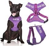Ziehen Sie nicht lila Farbe Coded Non-Pull-Front und Rückseite D Ring Gepolsterte und wasserdichte Weste Hundegeschirr verhindert Unfälle durch andere Ihren Hund in Vorwarnleuchte ( Medium Hals bis zu 40 cm Brust 48-72cm)