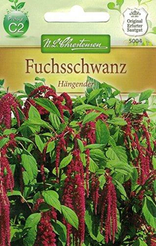 Chrestensen Fuchsschwanz \'Hängender\'