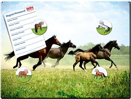 Magnettafel Pferd 40x30 cm - Pinnwand mit Motiv Pferde im Galopp (Magnetwand Blech)