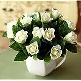 Las semillas de gardenia blanca Jasminoides Cabo Jazmín fragante flor, paquete original, 20 semillas / Paquete, Bonsai de int