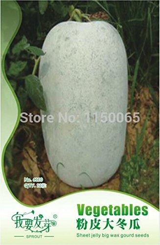 Heiße verkauf 12st Blatt Gelee Wachs Kürbis-Samen, Wachskürbis-Samen, Gemüsesamen, Bonsai Topfpflanze Hausgarten geben Schiff frei