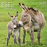 Esel (BK) 227419 2019: Broschürenkalender mit Ferienterminen und Bildern von süßen Eseln. 30 x 30 cm