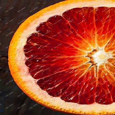 Go Garden Grosses soldes!!!Arbre fruitier de haute qualité, 20 pcs de citron bio, le délicieux fruit Bonsaï, jardin de citron vert comestible
