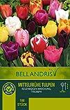 mgc24® Mittelfrühe Tulpenmischung Regenbogen - 200 Blumenzwiebeln (ca. 10-11mm)