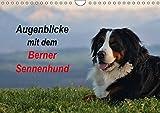 Augenblicke mit dem Berner Sennenhund (Wandkalender 2018 DIN A4 quer): Wie kaum eine andere Rasse repräsentiert der Berner Sennenhund den ... (Monatskalender, 14 Seiten ) (CALVENDO Tiere)