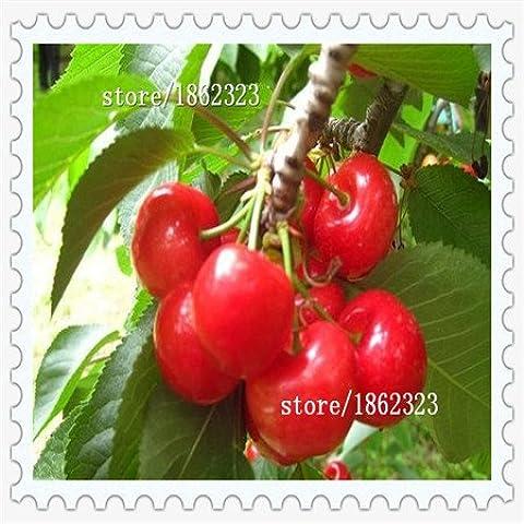 Nuovo arrivo! Diretto degli Stati Uniti Ciliegie ciliegio Semi di nano ciliegio frutta seme Sud Sementes da Fruta, 10 pc / pacchetto