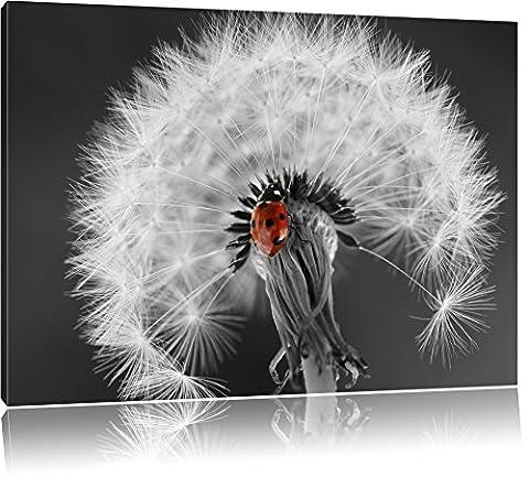 schöner Marienkäfer auf Pusteblume schwarz/weiß Format: 60x40 auf Leinwand, XXL riesige Bilder fertig gerahmt mit Keilrahmen, Kunstdruck auf Wandbild mit Rahmen, günstiger als Gemälde oder Ölbild, kein Poster oder Plakat