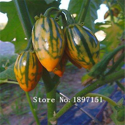 Grande Vente 100 graines, Violet Cycle de Aubergine semences de légumes graines de Aubergine