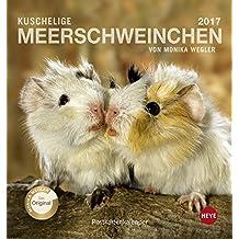 Meerschweinchen 2017. Postkartenkalender