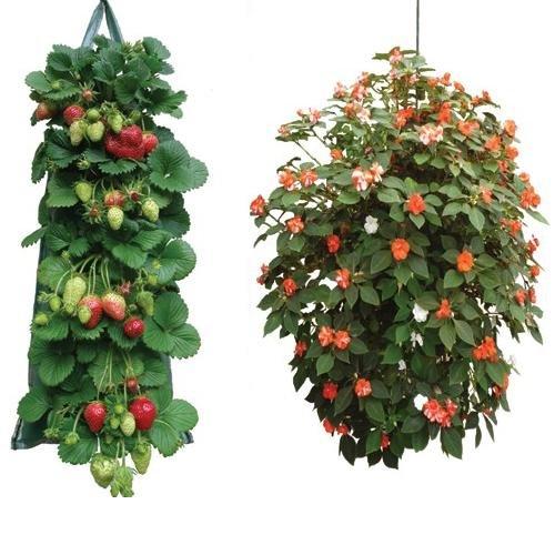 2-sacchi-da-appendere-per-la-coltivazione-di-fragole-pomodori-fiori