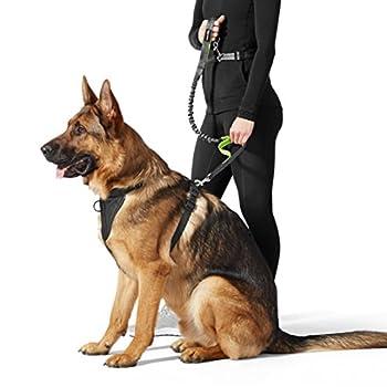 AmazonBasics Laisse élastique pour chien à 2passants, 1,21m, Vert