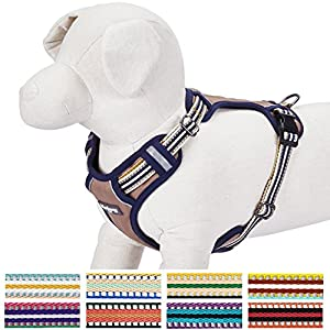 Blueberry-Pet-Soft-Comfortable-3M-Reflective-Multi-colored-Stripe-No-pull-Mesh-Padded-Dog-Harness-Vest-9-Colors-Matching-Collar-Lead-Available-Separately
