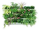 Bloomwall Vertical Wall Garden Planter by Savvygrow–Pianta rack sistema d' irrigazione con 4vasi e staffa di sospensione–Kit per coltivare piantine perfetta per interni & esterni e decorazione
