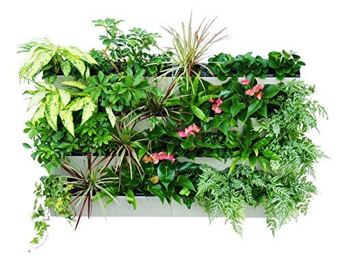 savvygrow bloomwall–Maceta con autorriego, diseño de tecnología de última Savvy–Vertical con soporte para colgar–para interior y exterior–balcón ventana hierba de jardines–Kit de cultivo de hortalizas y Decors