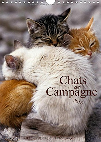 Chats de campagne 2016: 12 photos de chats des champs par Fabien Delairon