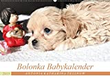 Bolonka Babykalender 2019 (Wandkalender 2019 DIN A2 quer): Ein gelungener Kalender mit hinreißenden Welpenfotos, denen sich kein Herz verschließen kann. (Monatskalender, 14 Seiten ) (CALVENDO Tiere)
