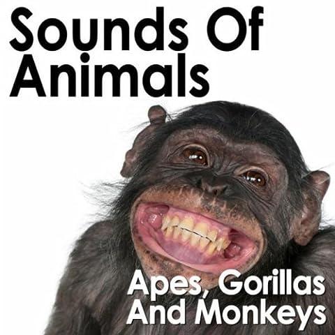 Ambient Jungle Sounds with Orangutan Calls (Jungle Orangutan)