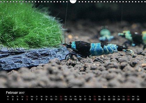 Zwerggarnelen - gepanzerte Juwelen im Aquarium (Wandkalender 2017 DIN A3 quer): Ein Jahr lang jeden Monat eine wunderschöne Garnele (Monatskalender, 14 Seiten ) (CALVENDO Tiere) -