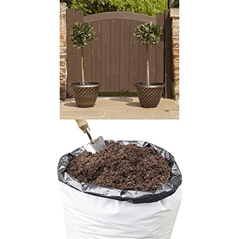 Pair of Standard Bay Trees 1M tall with 80L Compost for planting outdoors