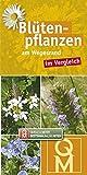 Blütenpflanzen am Wegesrand: im Vergleich (Quelle & Meyer Bestimmungskarten)