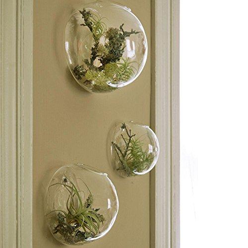 Set von 3 Wandblasen Terrarien Indoor Pflanzen Pflanzer Vase Wand montiert Mini Aquarium Wanddekor